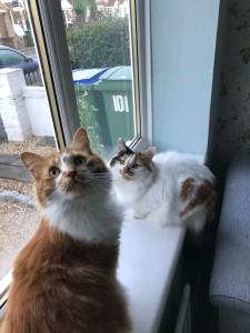 Fifi & Lola