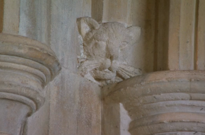 Exeter Cathedral cat