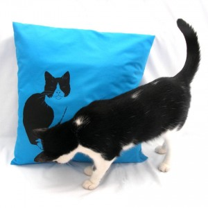 Cute-cat-admiring-cushion.jpg