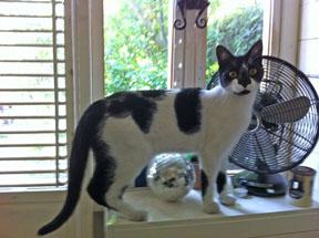 Monty as a kitten