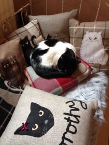 Monty asleep on cushions