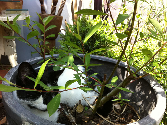 In the plant pot