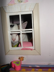 Peanut in the dolls' house